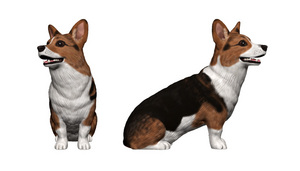 Medium_corgi_jisseki