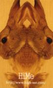 GENOME GRAPHIC DESIGN Laboratoryの作品