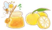 食品(柚子ジャム)販促イラスト 2013年作