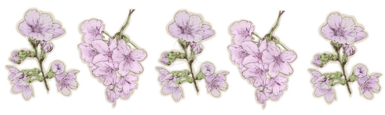 カットイラスト桜 水彩画のイラストリアルのイラスト花のイラスト Skillots