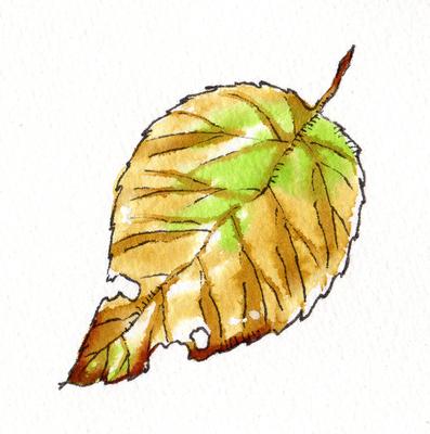 枯れ葉 樹木草木のイラスト ファーストマテリアル