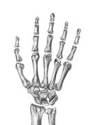 骨格のデッサン