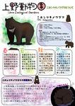 上野動物園の熊のレポートです。