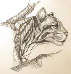 個人にて動物園で撮影した写真を元に、構図を変えて制作しております。 ケント紙につけペンで描いています。
