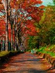 紅葉に彩られた小道。