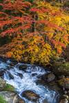 福島県塙町にある那倉川渓谷の紅葉です。