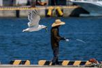 釣りをする人を横目に、魚を咥えて飛び去っていくウミネコ。
