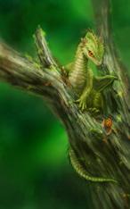 ドラゴン幼体
