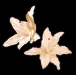 花の素材です。 第一弾はユリを描きました。