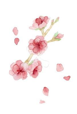 桃の花 水彩画のイラスト花のイラスト ファーストマテリアル