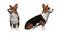 犬の写真から3Dデータ作成のご依頼
